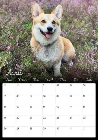 02_Corgi_Calendar_2020_Kamui_Cosplay